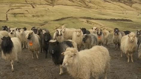 Seyður