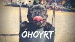 ohoyrt.png